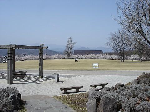 東御中央公園の桜: まちゃの信州...